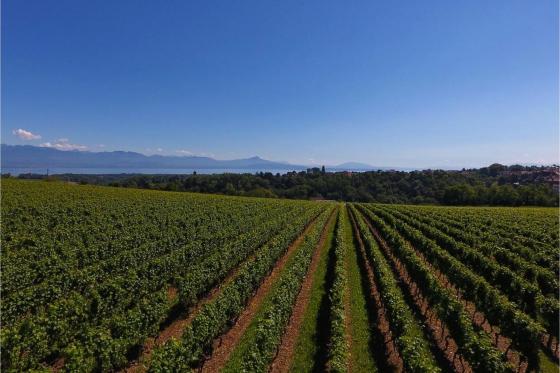Dégustation de vin pour deux - Domaine des Remans (VD) avec visite, apéro et bouteilles offertes 3 [article_picture_small]