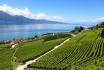 Dégustation de vin pour deux-Domaine Bovy (VD) avec visite, apéro et bouteilles offertes 6