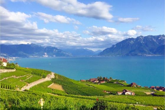 Dégustation de vin pour deux - Domaine Bovy (VD) avec visite, apéro et bouteilles offertes 4 [article_picture_small]