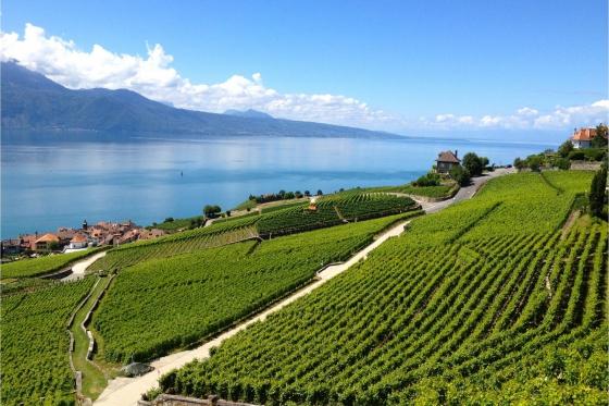 Dégustation de vin pour deux - Domaine Bovy (VD) avec visite, apéro et bouteilles offertes 5 [article_picture_small]