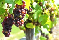 Dégustation de vin pour deux - Vins Boris Keller (NE) avec visite, apéro, et bouteilles offertes