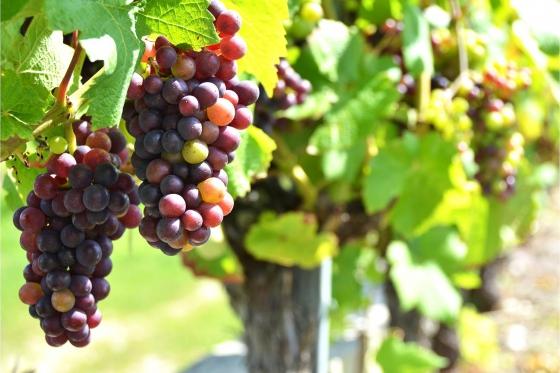 Dégustation de vin pour deux - Vins Boris Keller (NE) avec visite, apéro, et bouteilles offertes  [article_picture_small]