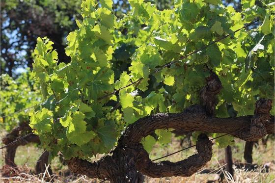Dégustation de vin pour deux - Vins Boris Keller (NE) avec visite, apéro, et bouteilles offertes 3 [article_picture_small]