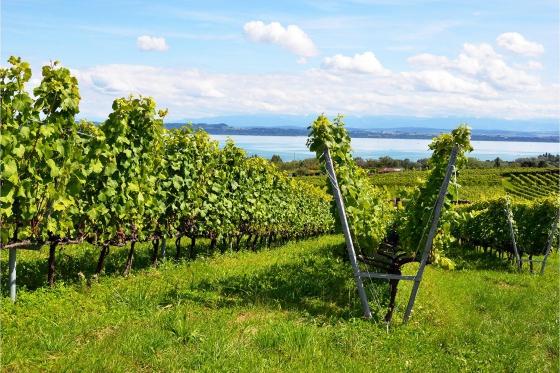 Dégustation de vin pour deux - Vins Boris Keller (NE) avec visite, apéro, et bouteilles offertes 4 [article_picture_small]