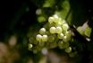 Dégustation de vin pour deux-Cave Philippe Bovet (VD) avec apéro, visite et 2 bouteilles offertes 8