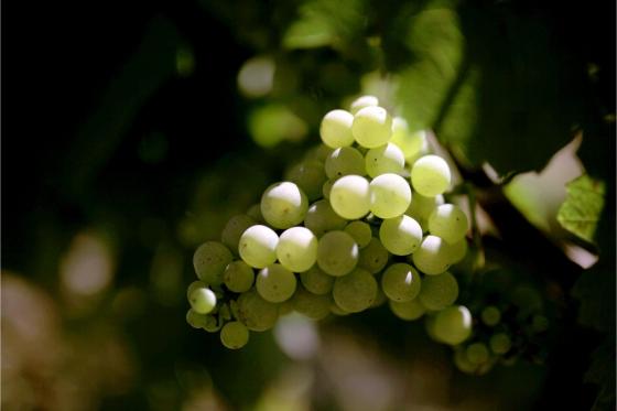 Dégustation de vin pour deux - Cave Philippe Bovet (VD) avec apéro, visite et 2 bouteilles offertes 7 [article_picture_small]