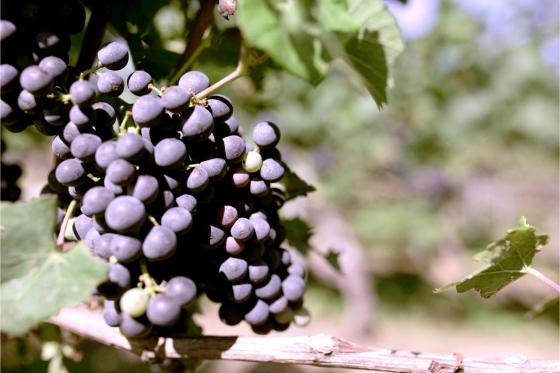 Dégustation de vin pour deux - Cave Philippe Bovet (VD) avec apéro, visite et 2 bouteilles offertes 8 [article_picture_small]