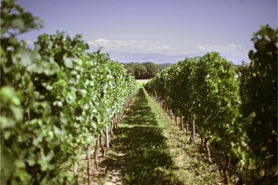 Dégustation de vin pour deux - Cave Philippe Bovet (VD) avec apéro, visite et 2 bouteilles offertes 9 [article_picture_small]