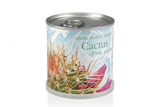 Fleurs en boîte - Cactus