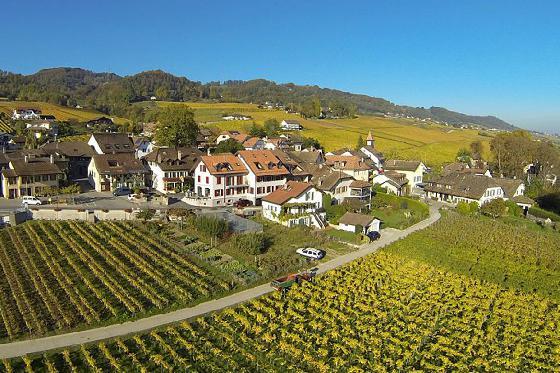 Dégustation de vin pour deux - Domaine de Mont sur Rolle ou de Tartegnin (VD) 2 [article_picture_small]