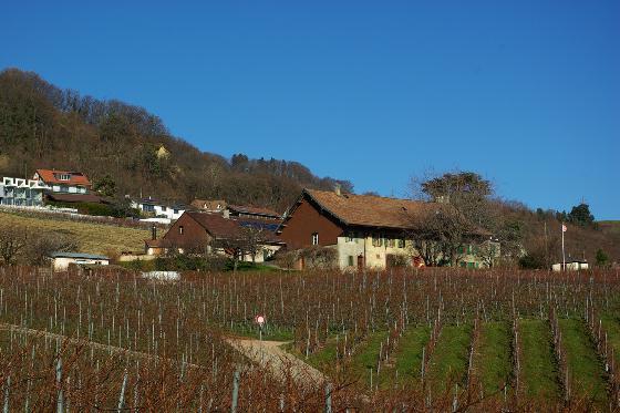 Dégustation de vin pour deux - Domaine de Mont sur Rolle ou de Tartegnin (VD) 3 [article_picture_small]
