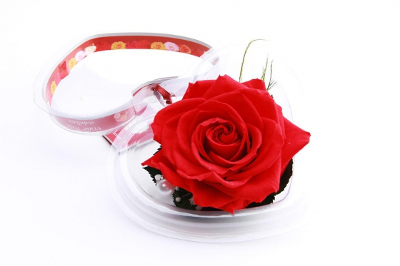 Ewig blühende Rose - in Herzbox 1