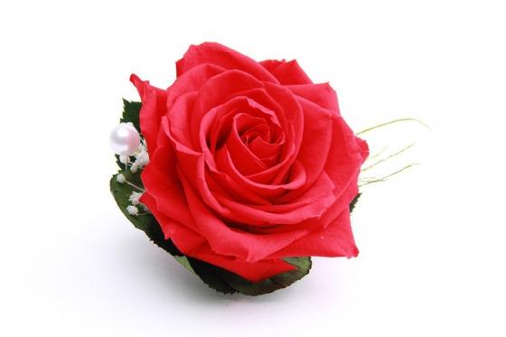 Ewig blühende Rose - in Herzbox 2