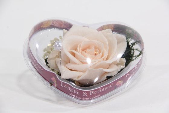 Ewig blühende Rose - in Herzbox 3