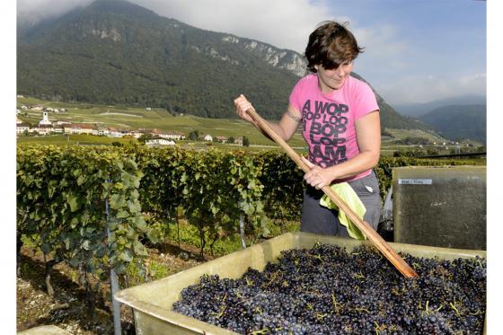 Wein Abo Geschenk - 3 Lieferungen exzellenten Wein geniessen 2 [article_picture_small]