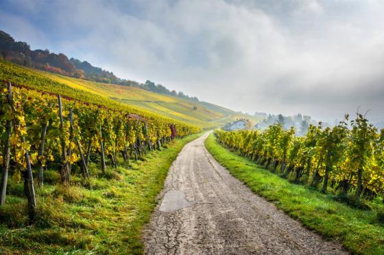 Wein Abo Geschenk - 3 Lieferungen exzellenten Wein geniessen 4 [article_picture_small]