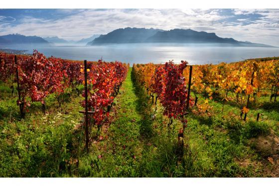 Wein Abo Geschenk - 3 Lieferungen exzellenten Wein geniessen 5 [article_picture_small]