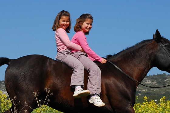 Anniversaire des enfants - Idée cadeau avec des chevaux  [article_picture_small]