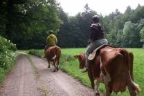 Kuh-Trekking inkl. Bio-Imbiss - grosse Tour