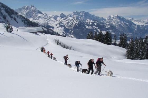 Schneeschuhtour für 4 - mit Huskybegleitung  [article_picture_small]