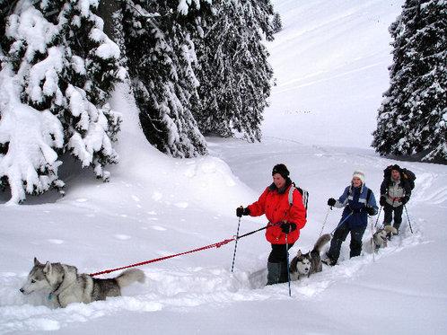 Schneeschuhtour für 4 - mit Huskybegleitung 2 [article_picture_small]