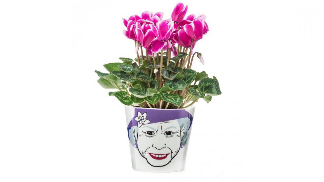 Blumentopf queen for Fliegen aus blumentopf