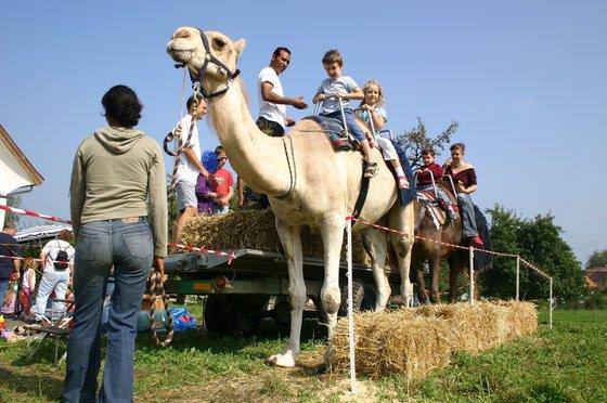 Monter à dos de chameau - Pour les enfants 3 [article_picture_small]