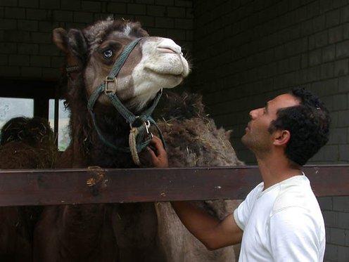 Monter à dos de chameau - Pour les enfants 4 [article_picture_small]