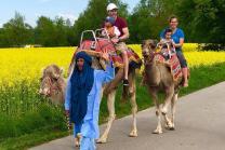 Kamel-Reiten - Für die Familie