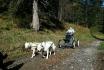 Wagentraining mit Huskies-Die Kraft der Huskies erleben 2