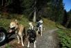Wagentraining mit Huskies-Die Kraft der Huskies erleben 3
