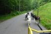 Wagentraining mit Huskies-Die Kraft der Huskies erleben 5