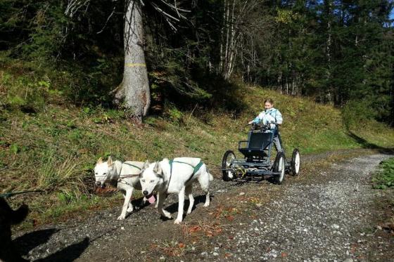Wagentraining mit Huskies - Die Kraft der Huskies erleben 1 [article_picture_small]