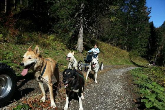 Wagentraining mit Huskies - Die Kraft der Huskies erleben 2 [article_picture_small]