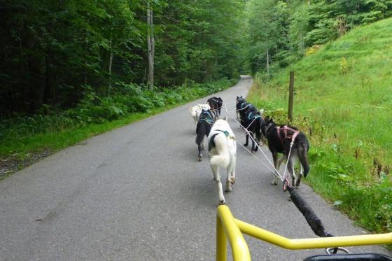Wagentraining mit Huskies - Die Kraft der Huskies erleben 4 [article_picture_small]