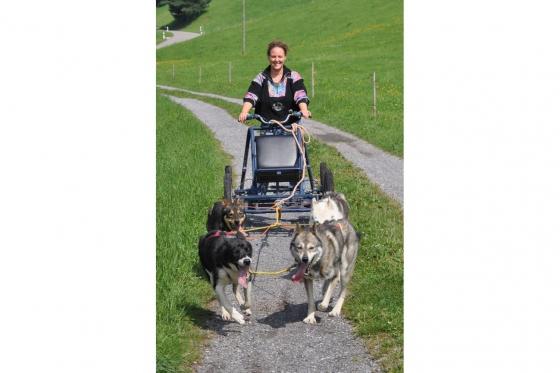 Wagentraining mit Huskies - Die Kraft der Huskies erleben 5 [article_picture_small]