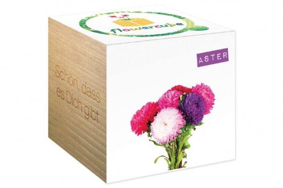 Aster Blumen - Schön, dass es Dich gibt