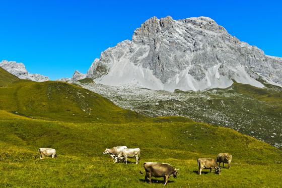 Berg-Romantik für 2 - im Bündnerland 13 [article_picture_small]