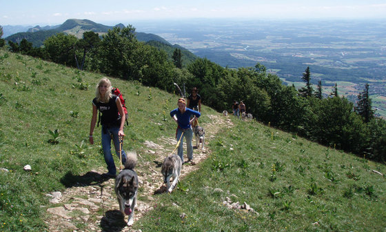 Husky Trekking  - im Sommer für 4 Personen 2 [article_picture_small]