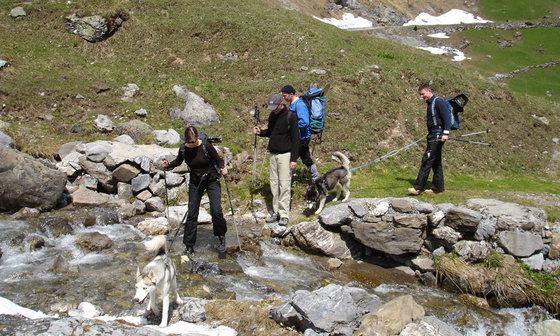 Husky Trekking  - im Sommer für 4 Personen 3 [article_picture_small]