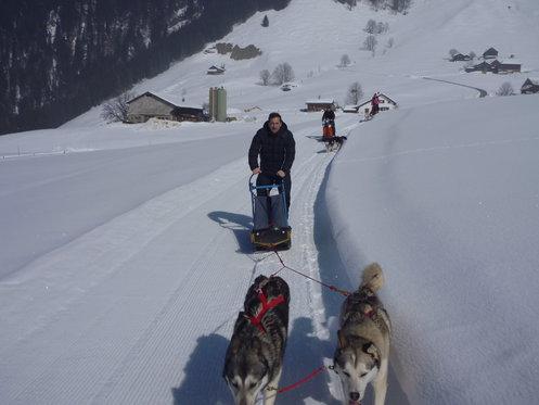 Schlittenhunde Tageskurs - Husky Erlebnis für einen Tag 1 [article_picture_small]