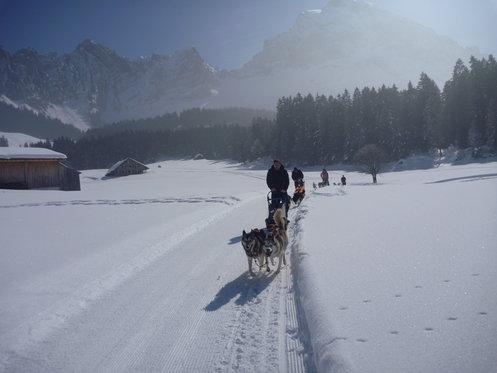 Schlittenhunde Tageskurs - Husky Erlebnis für einen Tag 2 [article_picture_small]