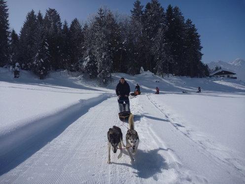 Schlittenhunde Tageskurs - Husky Erlebnis für einen Tag 3 [article_picture_small]
