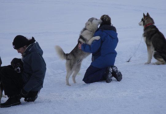 Schlittenhunde Tageskurs - Husky Erlebnis für einen Tag 4 [article_picture_small]