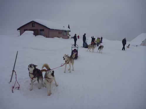 Schlittenhunde Tageskurs - Husky Erlebnis für einen Tag 8 [article_picture_small]