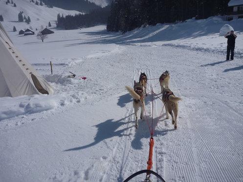 Schlittenhunde Tageskurs - Husky Erlebnis für einen Tag 9 [article_picture_small]