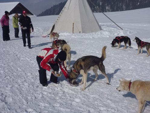 Schlittenhunde Tageskurs - Husky Erlebnis für einen Tag 10 [article_picture_small]