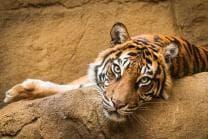 Zoo Familieneintritt - für 2 Erwachsene und 2 Kinder